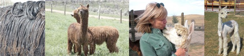 Zena Alpacas_Top 1 - http://www.zenasurialpacas.wordpress.com